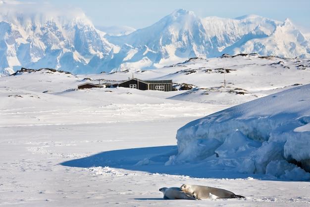 Mooi landschap in antarctica