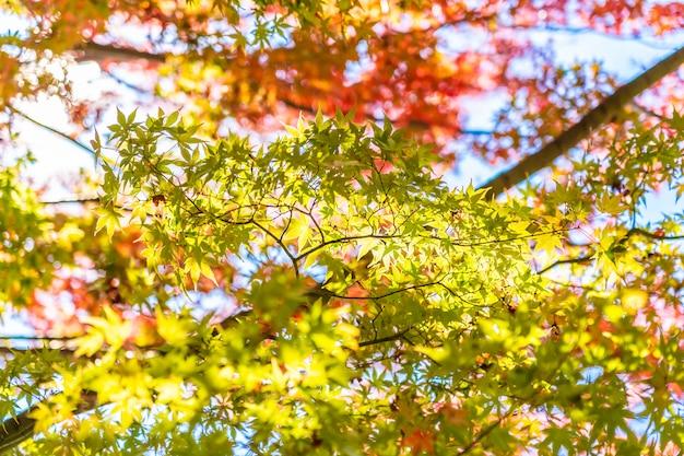 Mooi landschap met de boom van het esdoornblad in de herfstseizoen