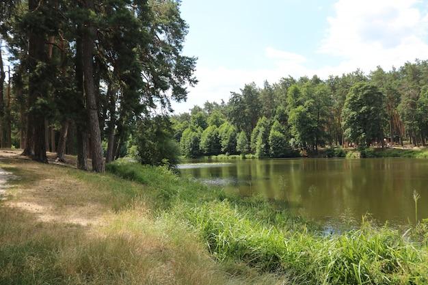Mooi landschap met een meernad bos