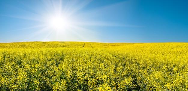 Mooi landschap met geel koolzaad veld en zon in blauwe hemel