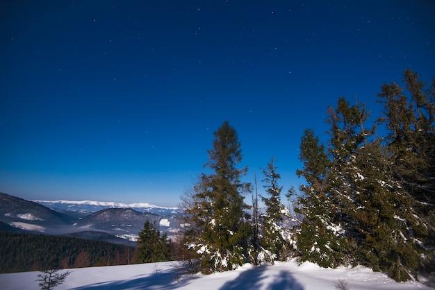 Mooi landschap met majestueuze hoge dennenbomen die groeien tussen witte sneeuwlaag tegen de blauwe lucht op een zonnige ijzige winterdag. concept van trekking en milieuvriendelijke vakantie.