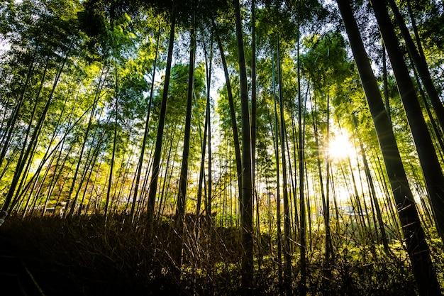 Mooi landschap van bamboebosje in het bos in arashiyama kyoto