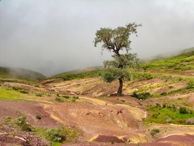 Mooi landschap van een eenzame boom in het midden van een leeg veld onder een grijze bewolkte hemel