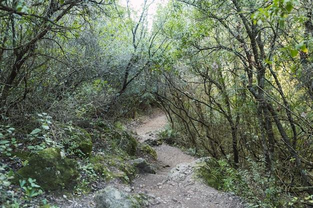 Mooi landschap van een groen pad in het bos met bomen
