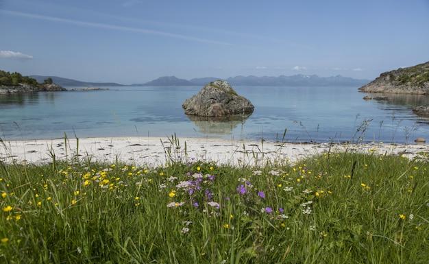 Mooi landschap van een strand vol wilde bloemen in lofoten, noorwegen
