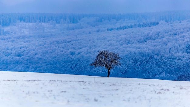 Mooi landschap van een winterlandschap met bomen bedekt met sneeuw