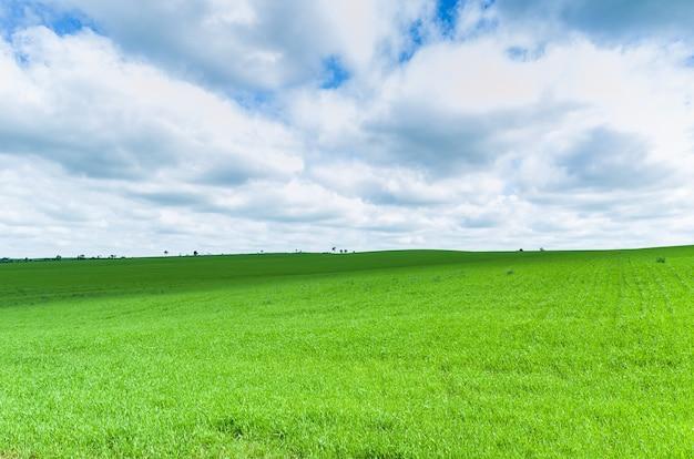 Mooi landschap van groen veld en bewolkte hemel