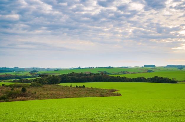 Mooi landschap van groen veld