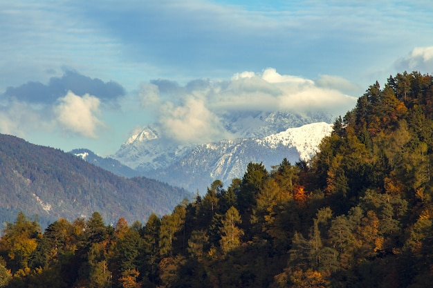 Mooi landschap van groene bomen die door hooggebergte in afgetapt, slovenië worden omringd
