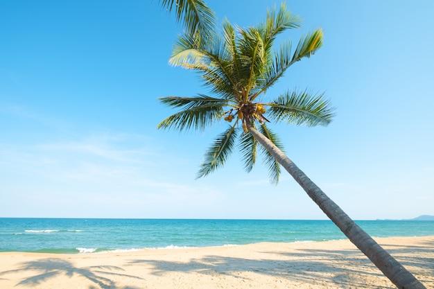 Mooi landschap van kokosnotenpalm op tropisch strand in de zomer