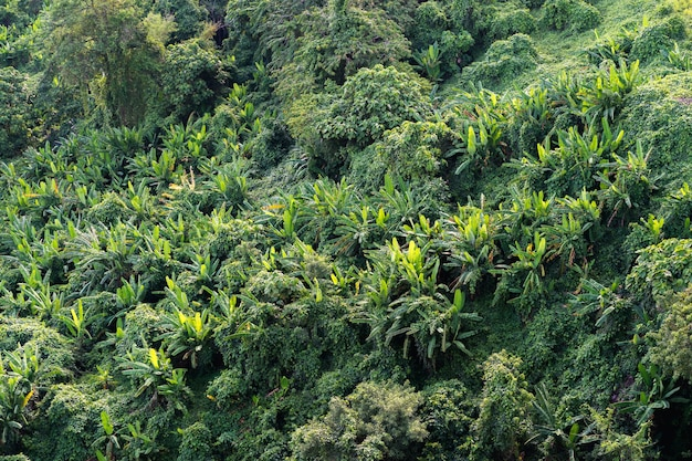 Mooi landschap van regenwoud overvloedige natuurlijke rijkdommen in thailand.