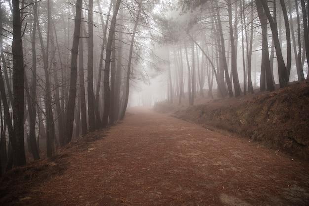 Mooi landschap van weg met hoge bomen