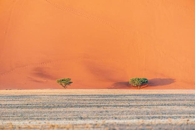 Mooi landschap van zandduinen in de woestijn van namibië, sossusvlei, namibië