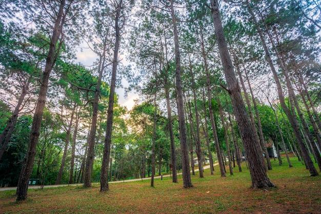 Mooi lariksbos met verschillende bomen, dennenbos groen op de berg op natuurpad in de ochtend.