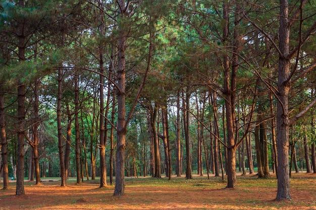 Mooi lariksbos met verschillende bomen, pijnboombos groen op de berg op aardsleep in de ochtend.
