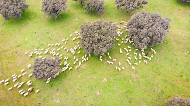 Mooi luchtfoto van de coutryside