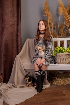 Mooi meisje met twee chihuahuahonden. hond chihuahua jong dier gelukkig meisje huisdier