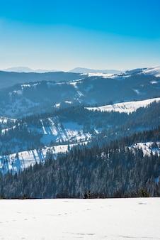 Mooi mystiek landschap van naaldbomen die op een heuvel groeien door de bewolkte koude winteravond van de hoge berg. hard en winter natuur concept