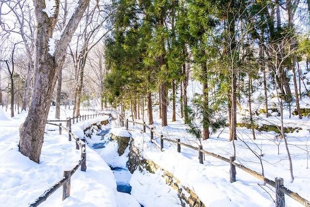 Mooi openluchtaardlandschap met boom in sneeuwwintertijd in hokkaido