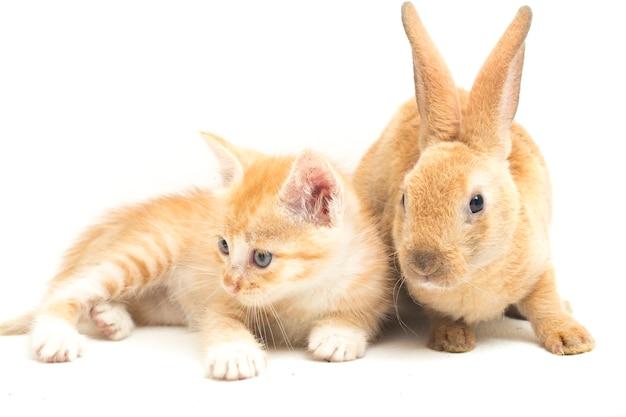 Mooi oranje geïsoleerd katje en bruin konijn