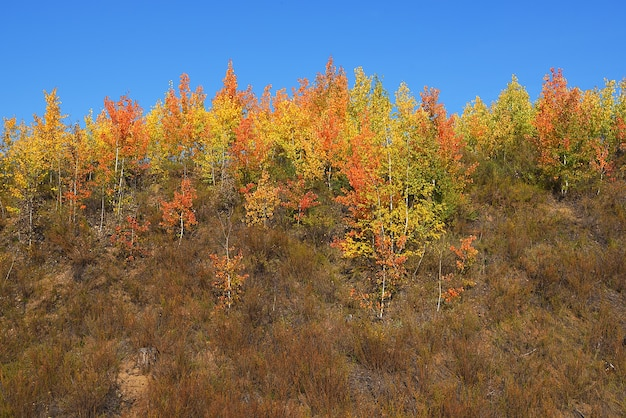 Mooi panorama van het de herfstbos op de bergheuvels.
