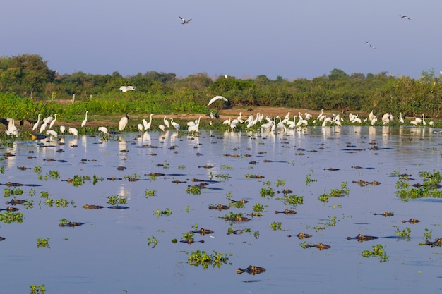 Mooi pantanal-landschap, zuid-amerika, brazilië. natuur en dieren in het wild langs de beroemde onverharde weg van transpantaneira.