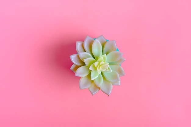 Mooi patroon van groene succulente bloem geïsoleerd op roze kleurenachtergrond