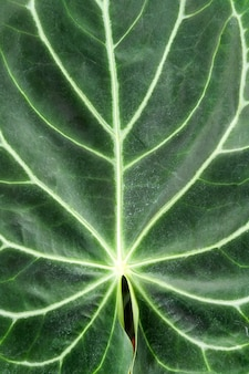 Mooi plantenblad in botanische kas, uniek patroon, vegetatie