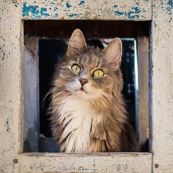 Mooi, pluizig, grijs kitten
