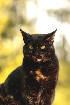 Mooi portret van een verdwaalde kat op een gele achtergrond, close-up, gele ogen