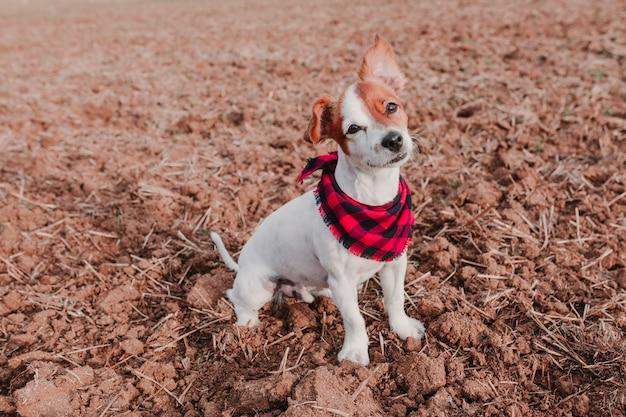 Mooi portret van stijlvolle hond met rode en zwarte plaid bandana zittend op de grond
