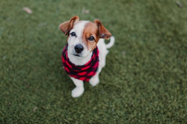 Mooi portret van stijlvolle hond met rode en zwarte plaid bandana zittend op het gras
