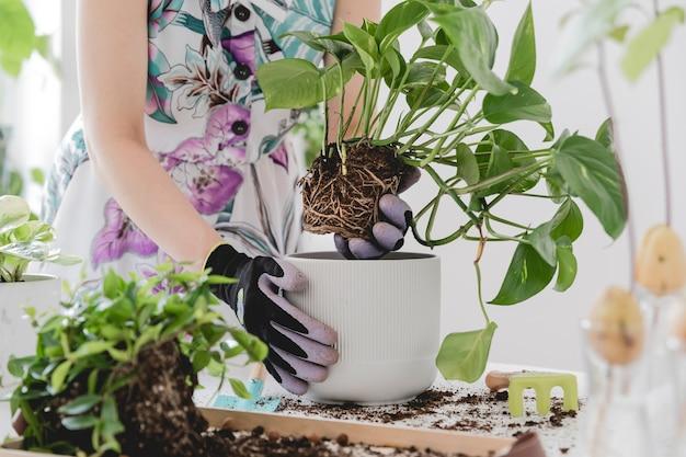 Mooi proces van thuis tuinieren jonge vrouw tuinman zorgt voor groene planten in stijlvolle marmeren keramische potten op de witte houten tafel planten houden van lentetijd stijlvol interieur met planten
