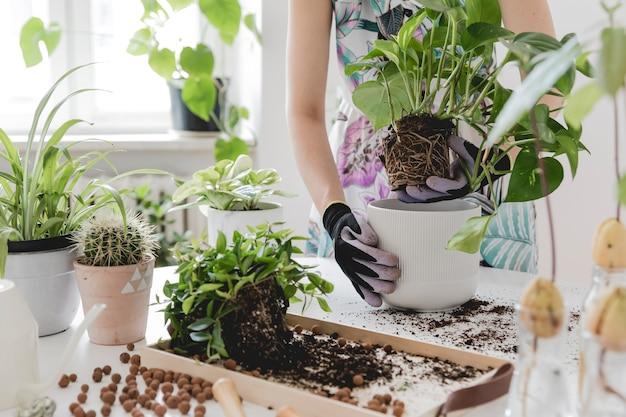 Mooi proces van tuinieren jonge vrouw zorgt voor groene planten in stijlvolle keramische potten op de witte houten tafel planten houden van concept van huistuin interieur met veel planten