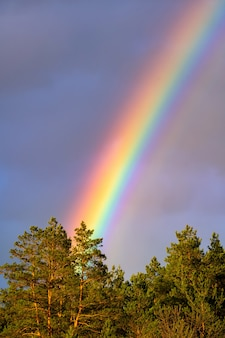 Mooi regenboogspectrum in de lucht na regen.