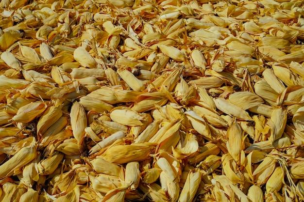 Mooi rijp geel graan in zak op droog schil landelijk landbouwbedrijf natuurlijk organisch concept