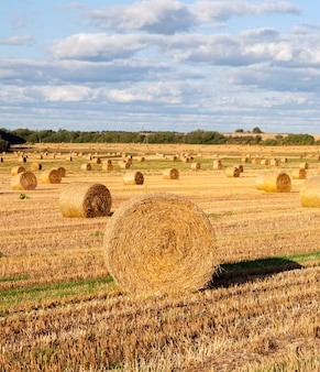 Mooi rond stro na het oogsten van granen, landschap in de zomer,