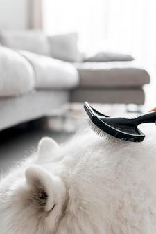 Mooi samojeed hond concept