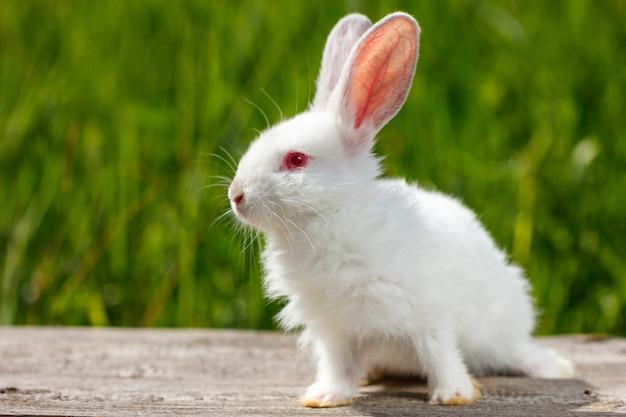 Mooi schattig wit konijn op natuurlijke groene achtergrond