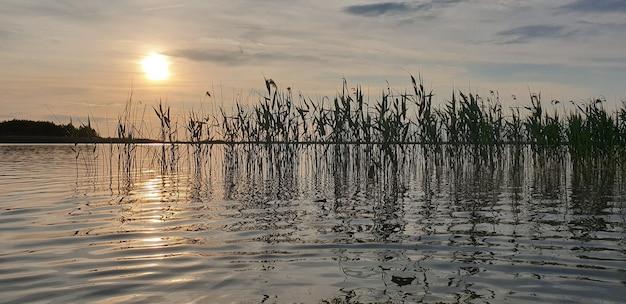 Mooi schilderachtig landschap van een zomermeer met riet op met kalm wateroppervlak in een gouden avondzonsondergang