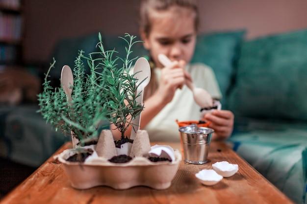 Mooi schoolmeisje dat keukenkruiden in de eierschaal, rozemarijn en tijm kweekt, concept van nul afval tuinieren, kas en gezonde levensstijl