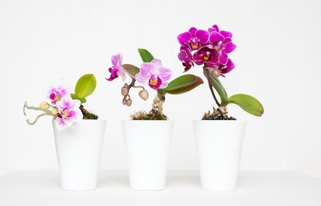 Mooi schot van bloemen in de witte plantenbakpotten met een witte achtergrond