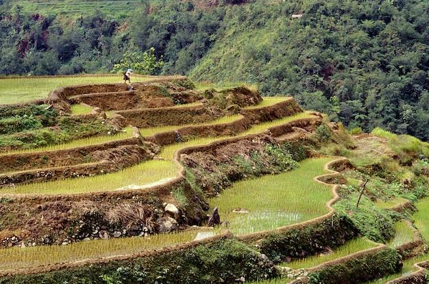 Mooi schot van de rijstterrassen van banaue met een beboste heuvel in filippijnen