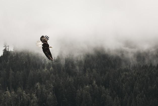 Mooi schot van een amerikaanse zeearend die boven het bos met mist vliegt