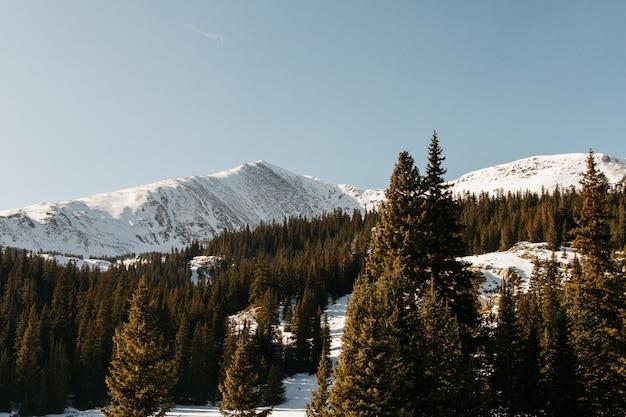 Mooi schot van een besneeuwde heuvel met groene bomen en een heldere hemel