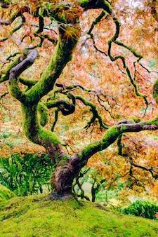 Mooi schot van een bochtige boom met verbazingwekkende kleurrijke bladeren bovenop een steile groene heuvel