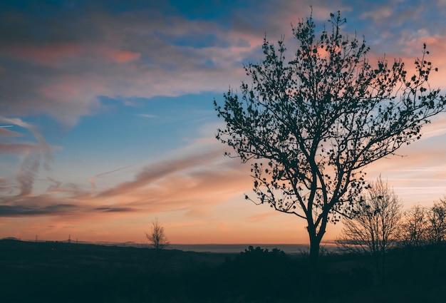 Mooi schot van een boom in een veld bij zonsondergang