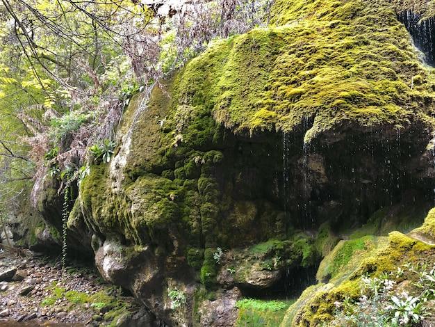 Mooi schot van een enorme rotsformatie bedekt met mos in het bos