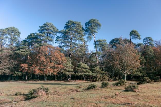 Mooi schot van een heleboel bomen in het new forest, in de buurt van brockenhurst, verenigd koninkrijk