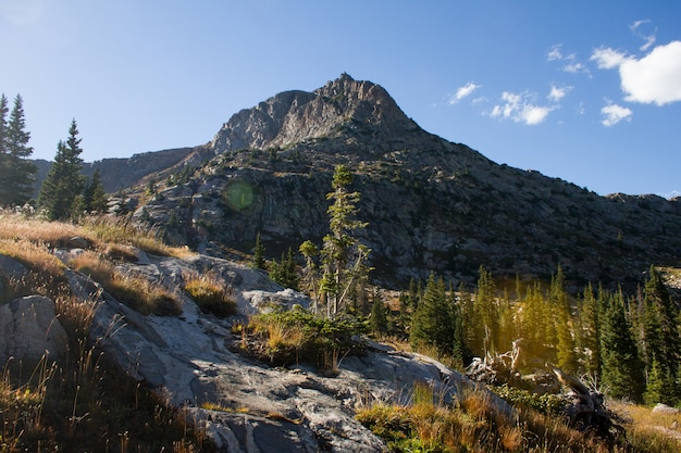 Mooi schot van een heuvel met bomen dichtbij de berg onder een blauwe hemel overdag